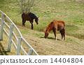 A farming pasture 14404804