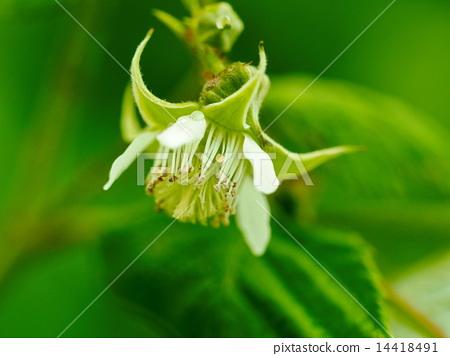 나무 딸기 꽃 14418491