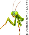 A praying mantis 14427664