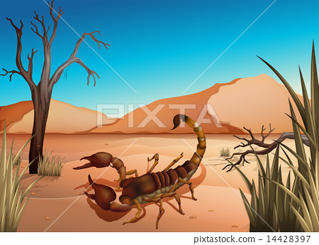 A desert with a scorpion 14428397