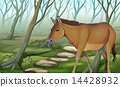 A horse at the forest 14428932