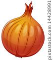 An onion 14428991