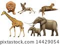 動物 非洲 非洲人 14429054