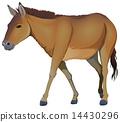 A brown horse 14430296