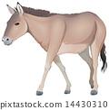 A donkey 14430310