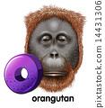 A letter O for orangutan 14431306