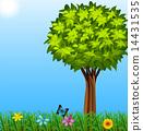 樹葉 綠化 綠葉 14431535