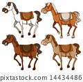 Four horses 14434486