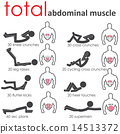 abdominal muscle 14513372