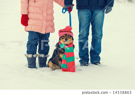 Young couple walks with dog wearing hat and scarf 14538863