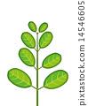 一種植物 14546605