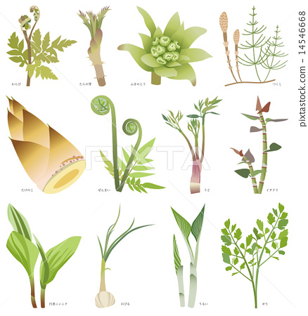 Wild vegetables 14546668