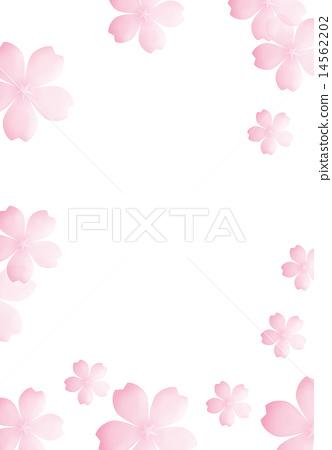 櫻桃樹 14562202