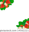 草莓 14562221