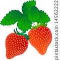 草莓 14562222