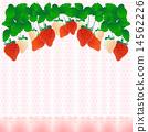 草莓 14562226