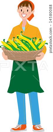 收穫玉米 14580088