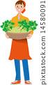 收穫芹菜 14580091