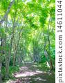 bower, tree, shade 14611044