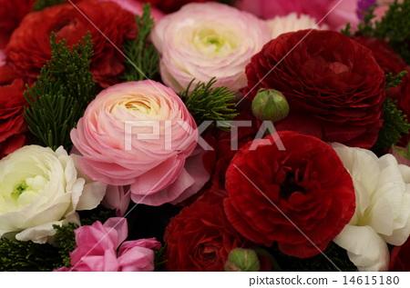Assorted Ranunculus 14615180