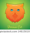Persian cat 14615610