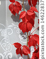 red vine leaves on the wall 14622837