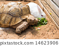 turtle, turtles, tortoises 14623906