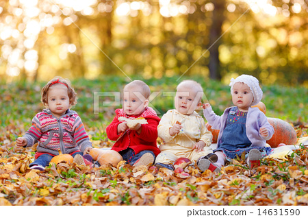 Stock Photo: Four cheerful little baby sitting on yellow autumn leaves