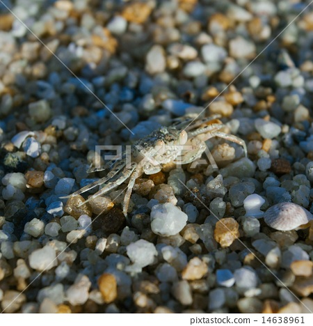 Hermit or soldier crab on sea pebbles background  14638961