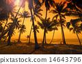 beach, paradise, tropical 14643796