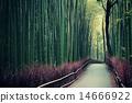 Bamboo Grove 14666922