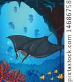 海底的 游泳 鱼 14686758