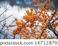 浆果 莓 黄色 14712870