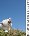 猫 猫咪 蓝天 14713164