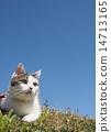 猫 猫咪 蓝天 14713165