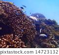 열대어, 산호, 바다 14723132