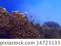 열대어, 산호, 바다 14723133