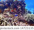 열대어, 산호, 바다 14723135