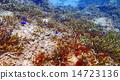열대어, 산호, 바다 14723136