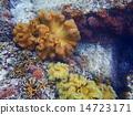 산호, 바다, 수중 14723171