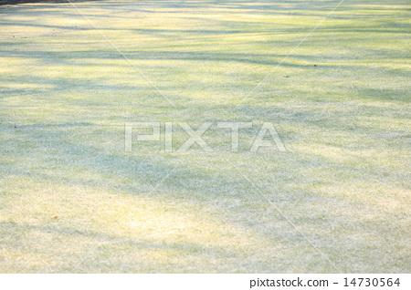 잔디 모양 14730564