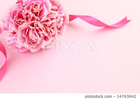 康乃馨 母親節 禮物 14763642