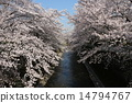 Cherry blossoms and rivers 14794767