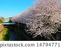 Cherry blossoms along the river 14794771
