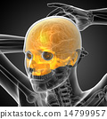 3d render medical illustration of the upper skull 14799957