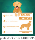 Golden retriever dog banner 14803995