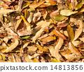 Leaves 14813856