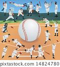 baseball, vector, vectors 14824780