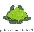 羅馬西蘭花 花椰菜 西蘭花 14832876