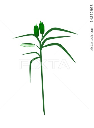 Fresh Sesame Plant on A White Background 14832968